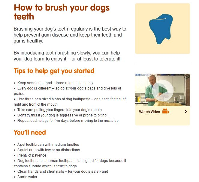 Can I Brush My Dog S Teeth With Kids Toothpaste