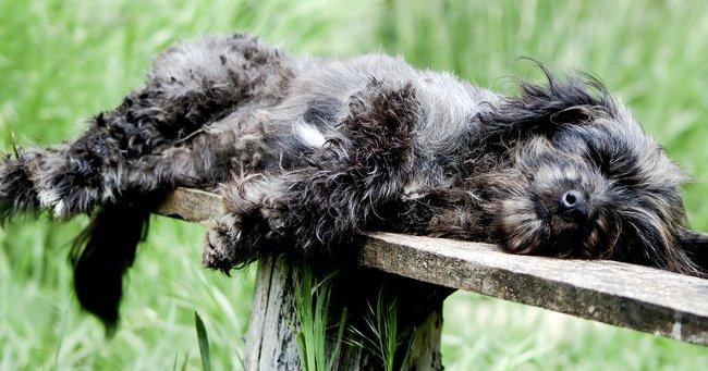 http://blog.petspyjamas.com/uploads/2012/04/dog-walk.jpg