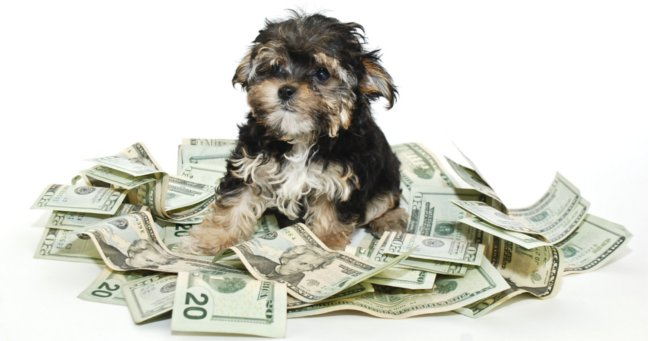 How much does a dog cost? Dog with money