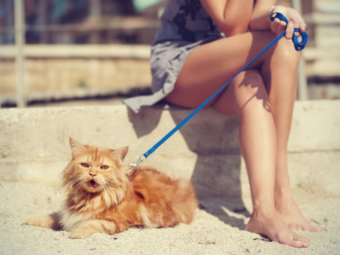 cat on lead (2)
