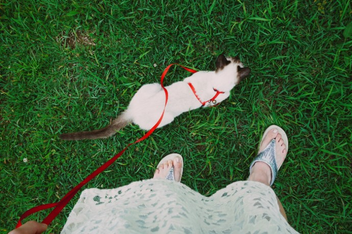 cat on lead (3)