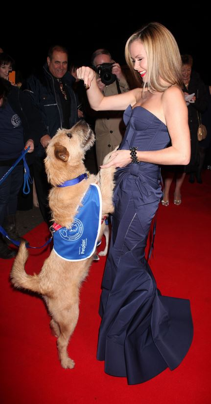 What Breed Is Amanda Holden S Dog