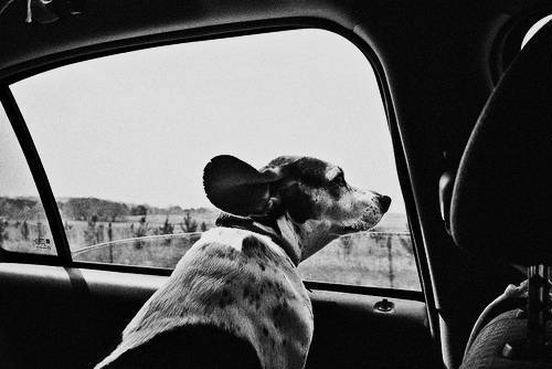 pet travel 2