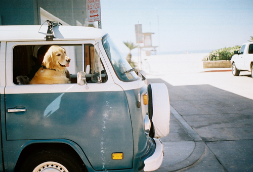 pet travel 3