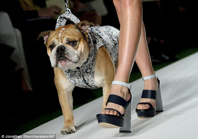 dog on catwalk