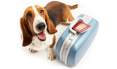Dog with passport and suitcase
