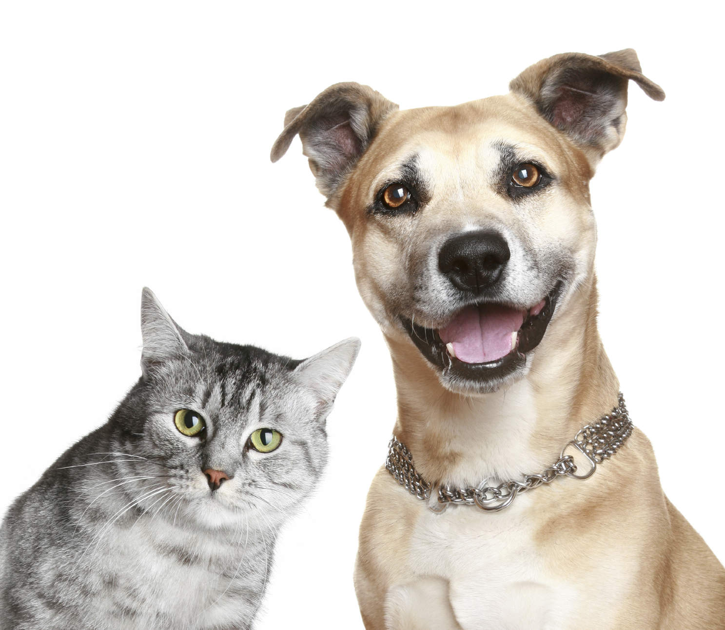 Cat & Dog for Christmas: Ban pet consumption in Switzerland