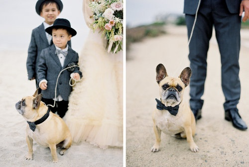 Dog wedding 3 (1)