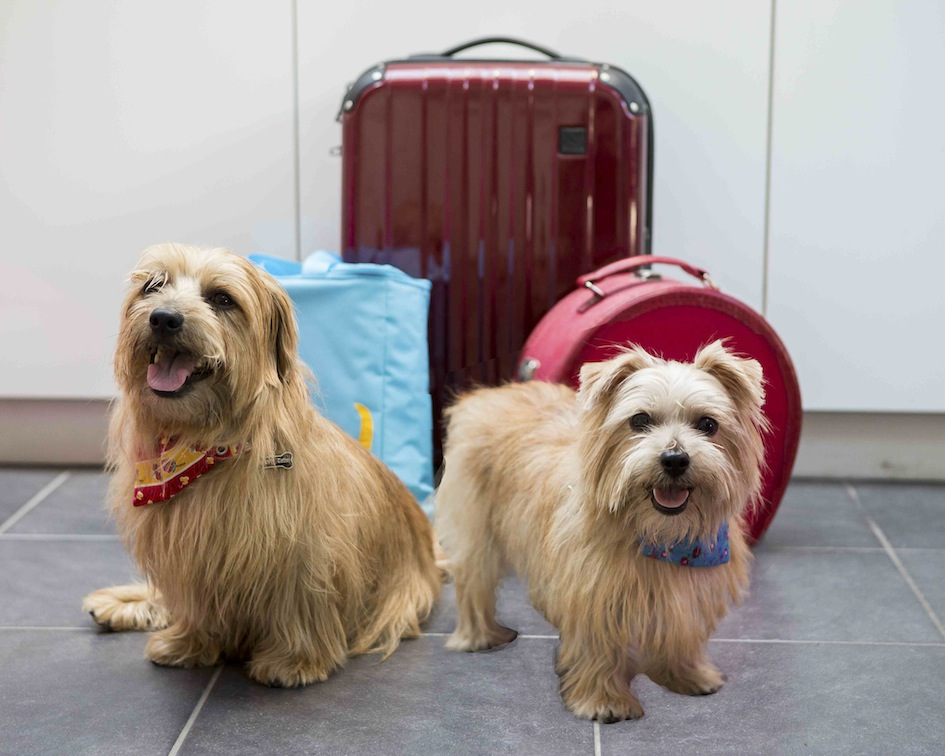 Newly groomed Heidi and Rufus with suitcases