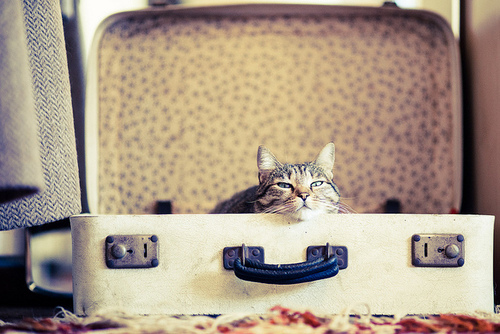 another great reason to travel with your pet 1