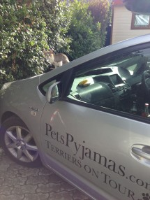 A cat suns itself on the bonnet of the PetsPyjamas Terriers on Tour car at Camping Parisi