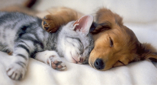 kitten and puppy cuddling