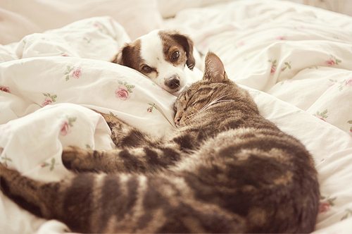 dogs and cats on the bed asleep