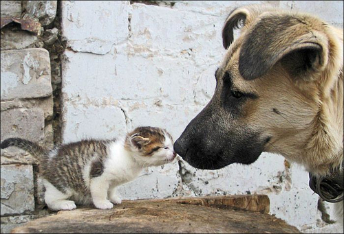 can cats and dogs be friends 3