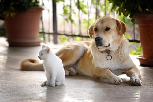 dogs and cats friendship