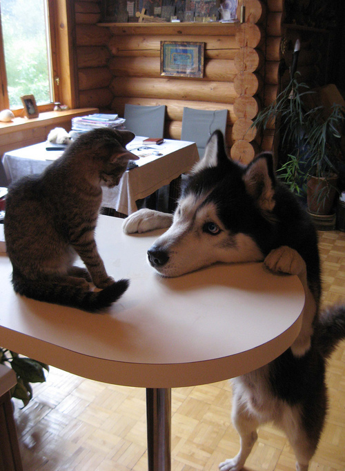 can cats and dogs be friends 8