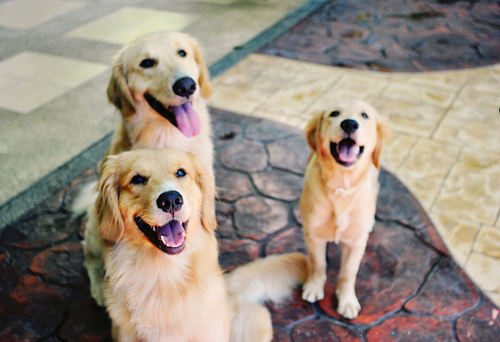 How To Prevent Dogs From Getting Kennel Cough