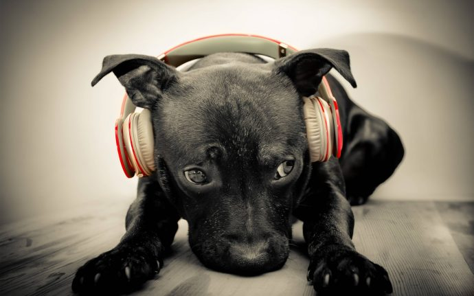 Image result for dogs listening to music