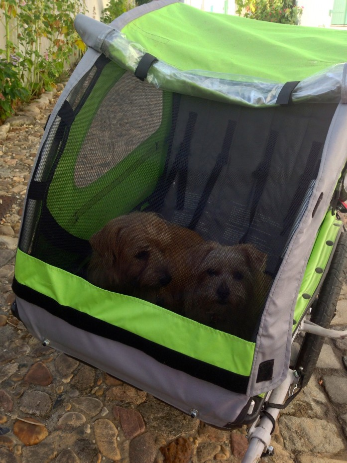 Rufus and Heidi in their cycle trailer