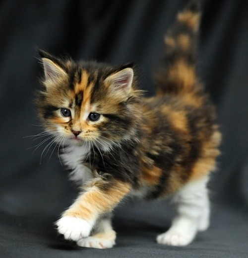 top 5 tips for owning a kitten 4