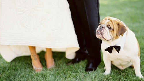 would you take your dog to your wedding 5