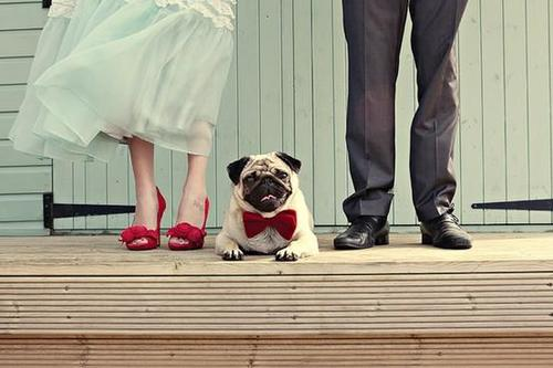 would you take your pet to your wedding 1