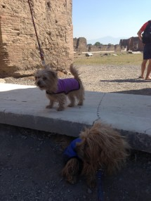Rufus and Heidi find a nice breezy, shaded spot amid the ruins of Pompeii