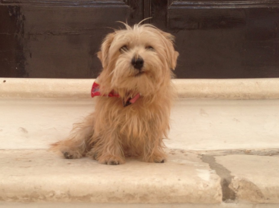 Heidi's happy to have found this cool stone doorstep in a shady corner of Ostuni.
