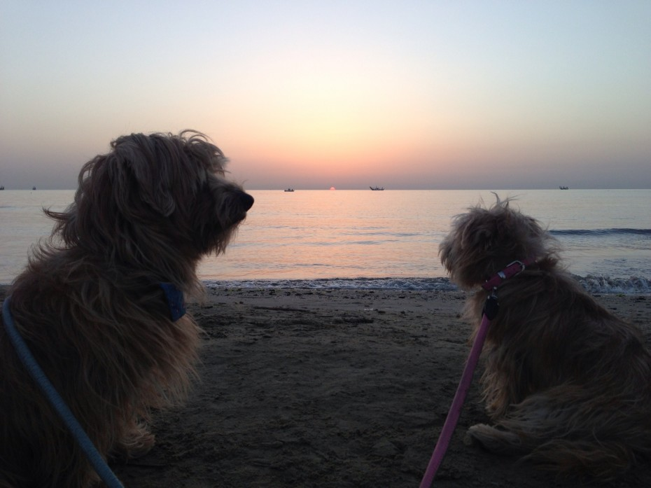 Rufus and Heidi catch the sunrise on the beach in San Benedetto del Tronto