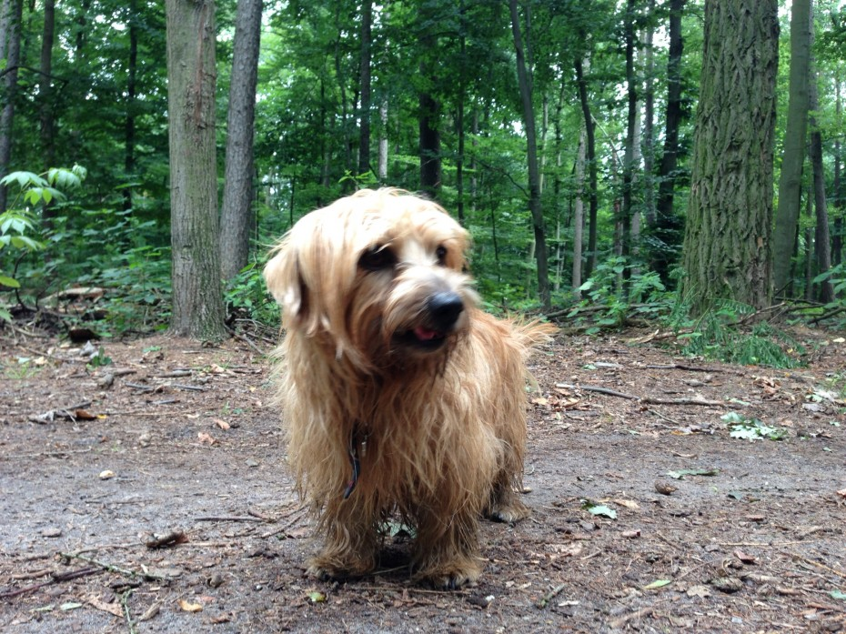 Rufus clearly enjoys being in the Grunewald – he appears to be smilling!
