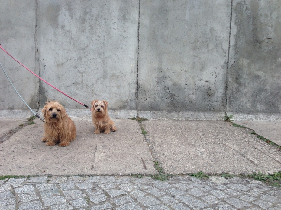 Rufus and Heidi appear to pick up on the sombre mood at a section of the Berlin Wall preserved as a memorial at Bernauerstrasse