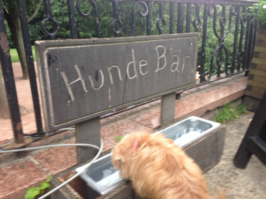 "Heidi helps herself to a drink at the ""Hunde Bar"""