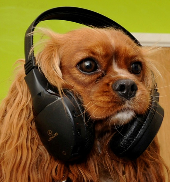 music therapy for pets