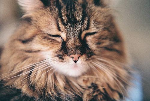 names for kittens