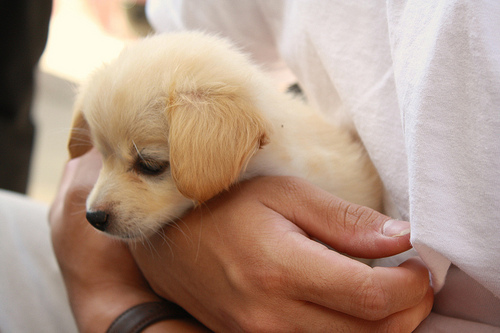 puppies for sale dog breeders