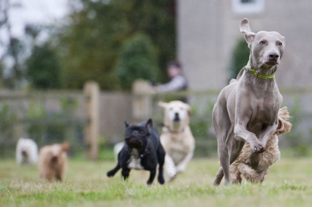 How to choose boarding kennels for Country cottage kennel