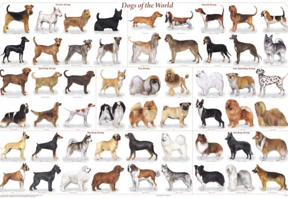 Top 10 Dogs For Kids Petspyjamas
