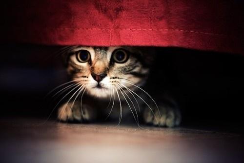 shaq and cat gif