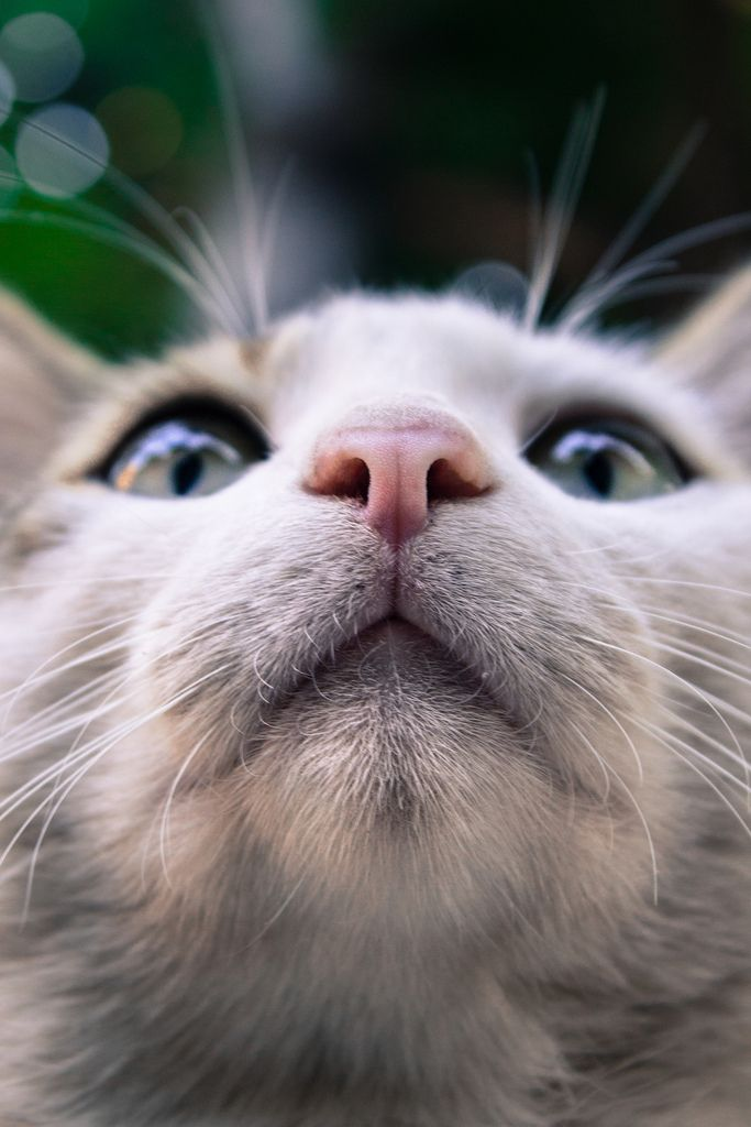 cat looking up