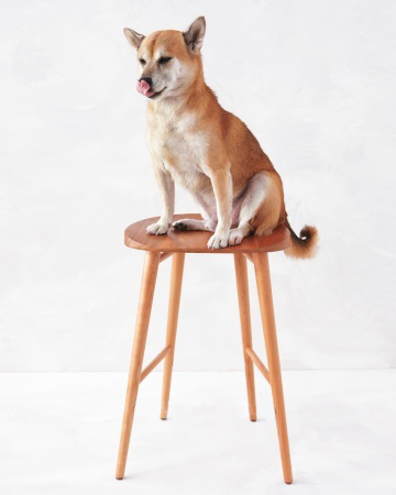 dog stool edit