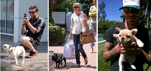 French bulldog celebs