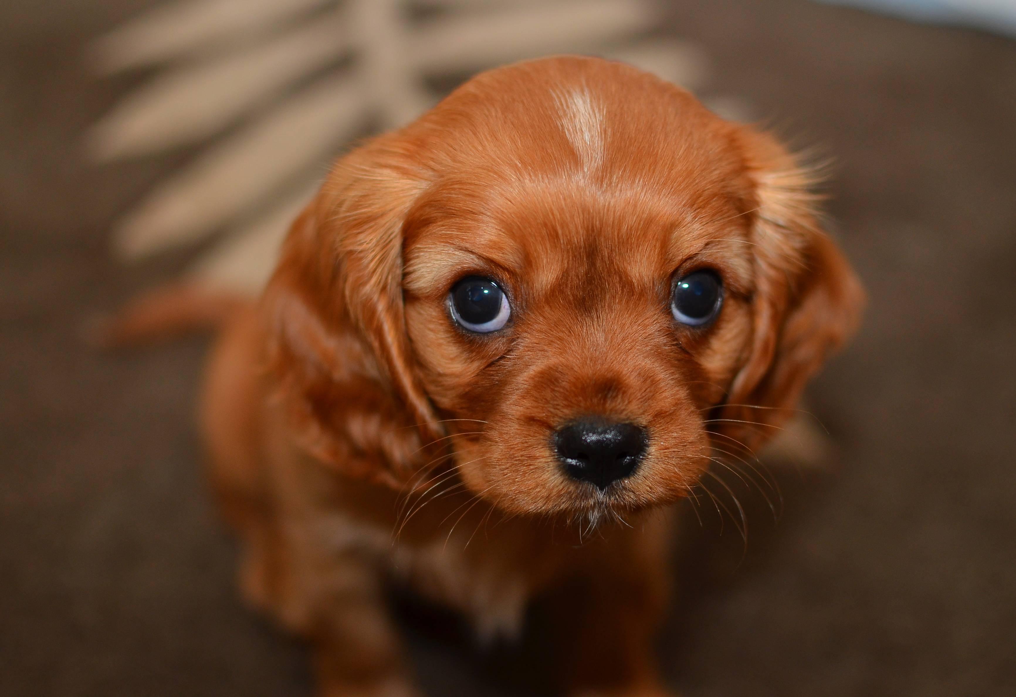 Dogs Feel No Shame Petspyjamas