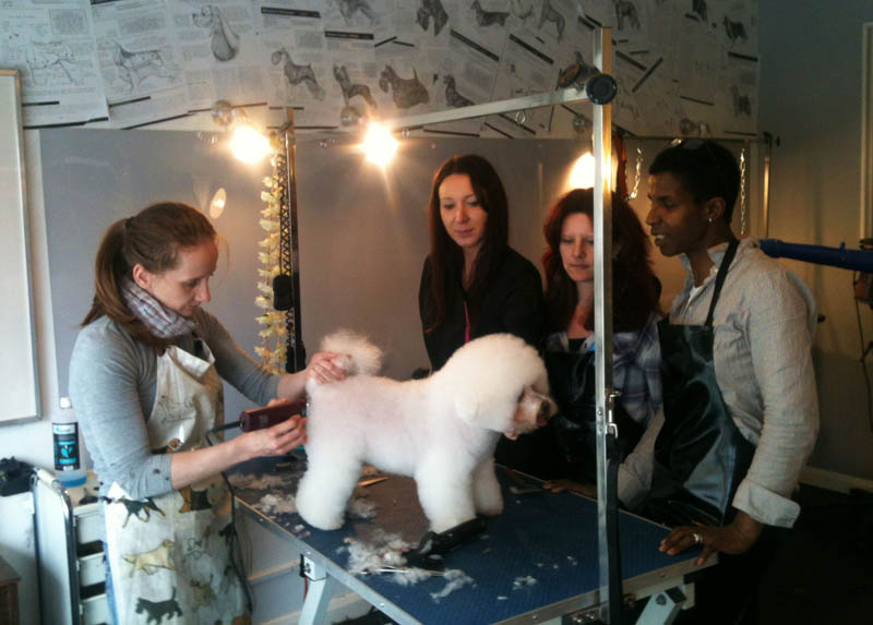 Dog Grooming Hand Stripping Clapham