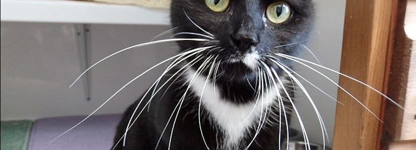 Homeless cat is the cat's whiskers! / PetsPyjamas