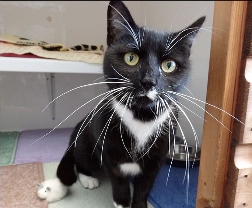 Homeless Cat Is The Cat S Whiskers Petspyjamas