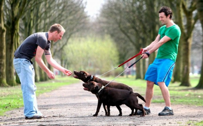 How To Train Your Dog To Walk To Heel
