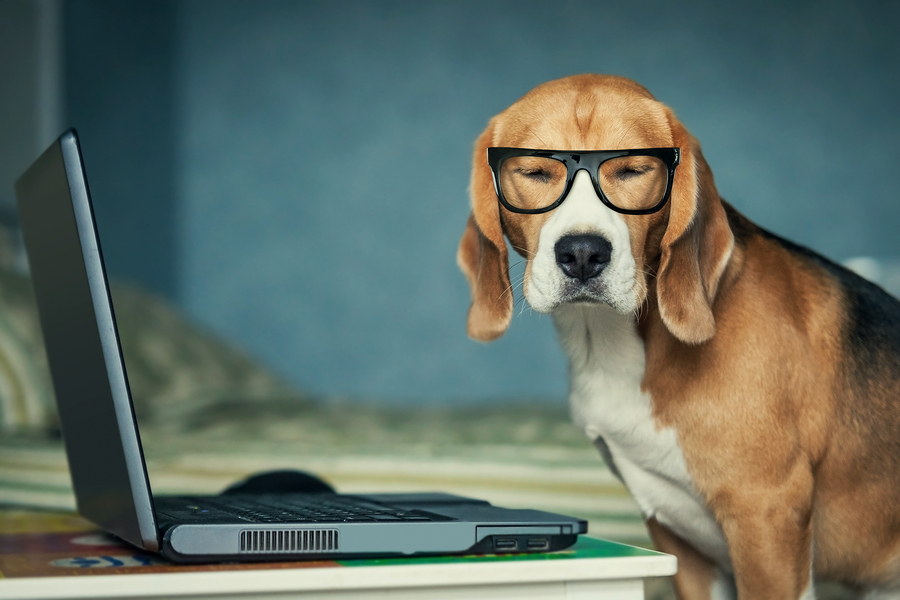 how to know your dog is stressed