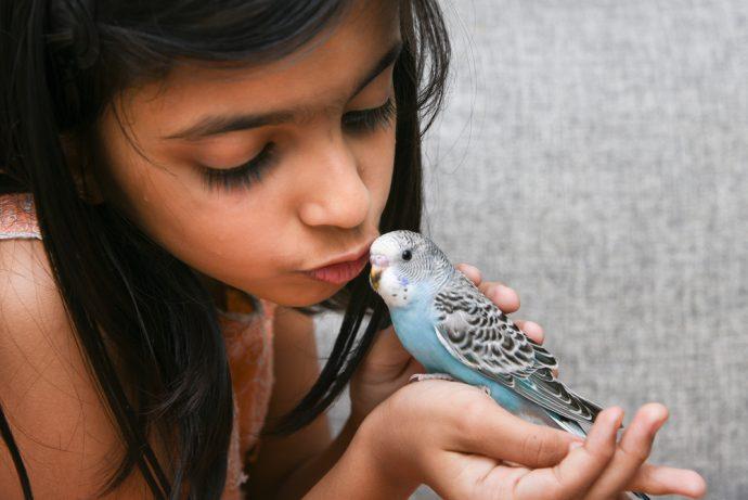 animaux de compagnie pour les enfants oiseau