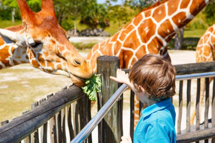 animaux de compagnie pour enfants girafe