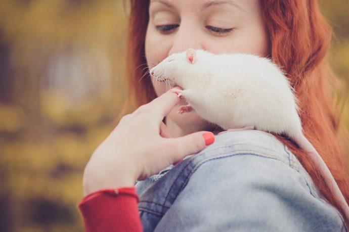 animaux de compagnie pour enfants rat